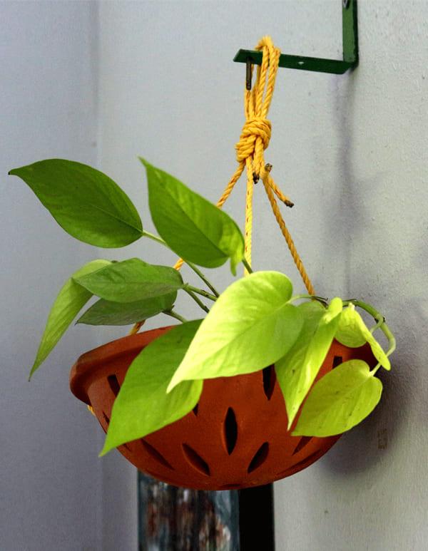 Orchid Cap (TCP146)